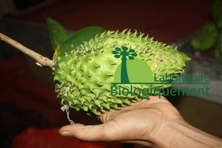 Le fruit du corossol bio