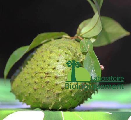 Le fruit et la fruit du graviola corossol de l'Amazonie
