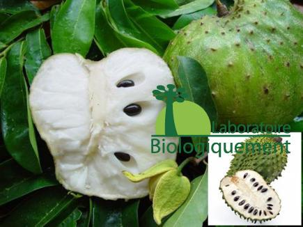 Le fruit de graviola corossol bio anticancer naturel